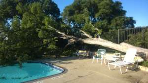 Fallen Tree at Lakewood HOA